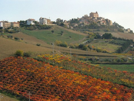 Monteprandone with Vineyards, Marche, Italy