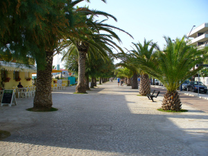 Palms in San Benedetto del Tronto, Italy