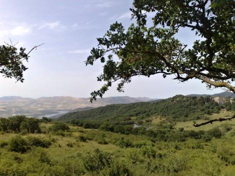 Ficuzza Nature Riserve, Monti Sicani, Sicily, Italy