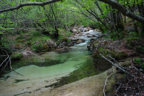 The stream Scerto in Camosciara, Abruzzo National Park, Italy