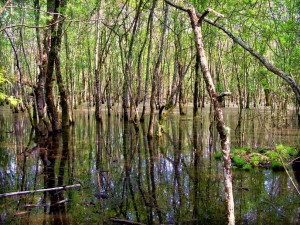 A typical piscina in the park's plain forest, Monte Circeo National Park, Lazio, Italy