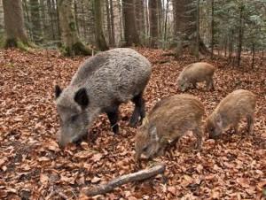 euganean hills fauna