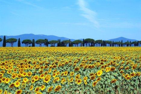Maremma Toscana, Italy