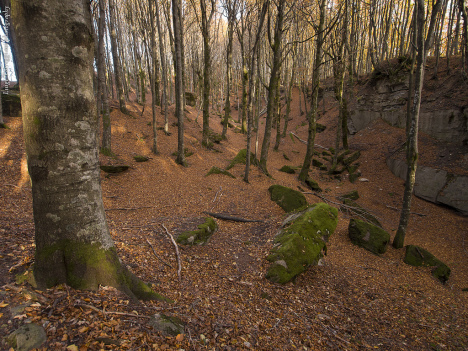 Foreste Casentinesi - Monte Falterona – Campigna National Park, Emilia Romagna, Tuscany, Italy