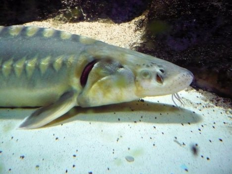 Aquarium, Milano, Lombardy, Italy