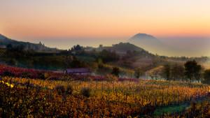 colli euganei (euganean hills)